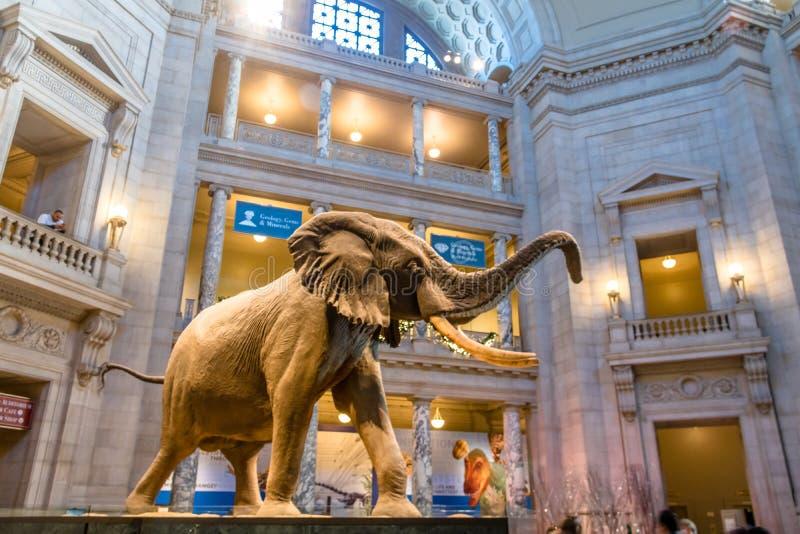Intérieur du musée national d'histoire naturelle de Smithsonian Institution - Washington, D C , les Etats-Unis images libres de droits
