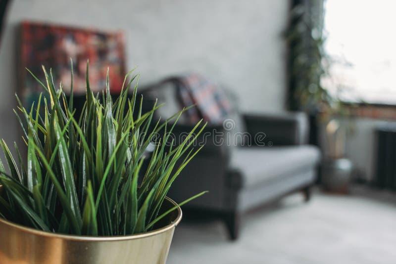Intérieur moderne de grenier d'eco dans le salon, plancher en béton, sofa, minimalisme Foyer sur la plante d'intérieur verte image libre de droits