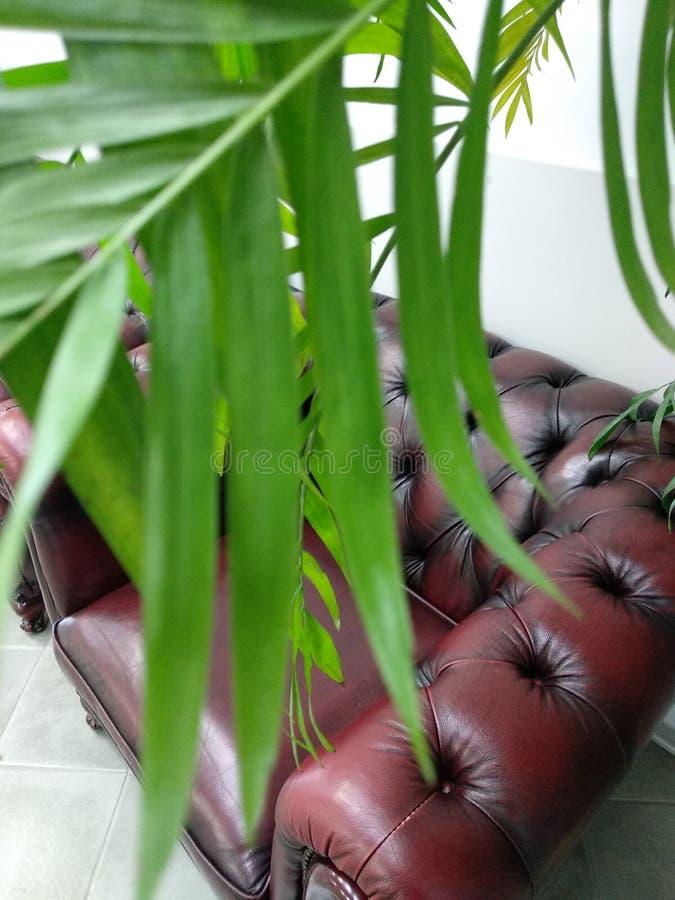 Int?rieur de bureau avec un sofa, un fauteuil et les plantes vertes photographie stock libre de droits