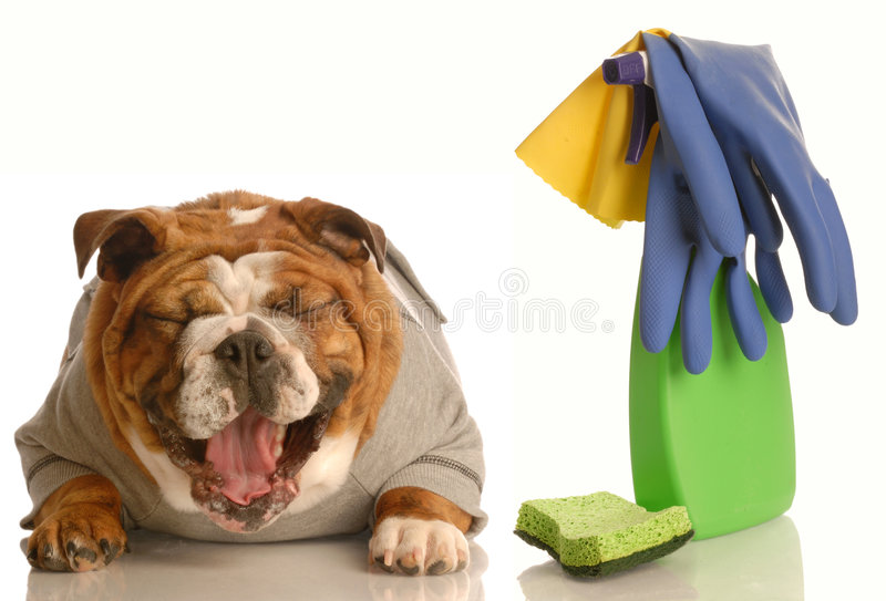 inte-utbildat hundhus royaltyfri fotografi