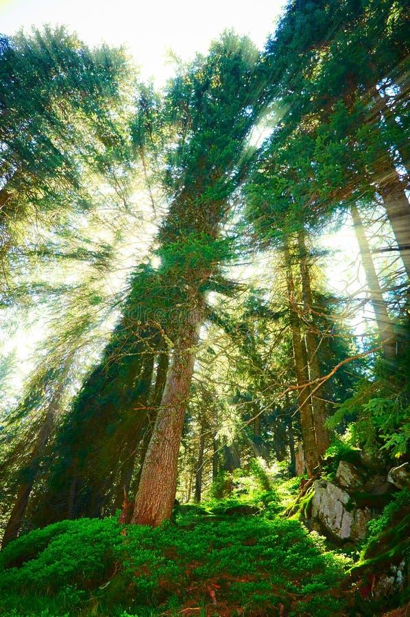 Integrado en el paisaje, para su contenido Bosque del cuento de hadas, paisaje de la montaña imagenes de archivo