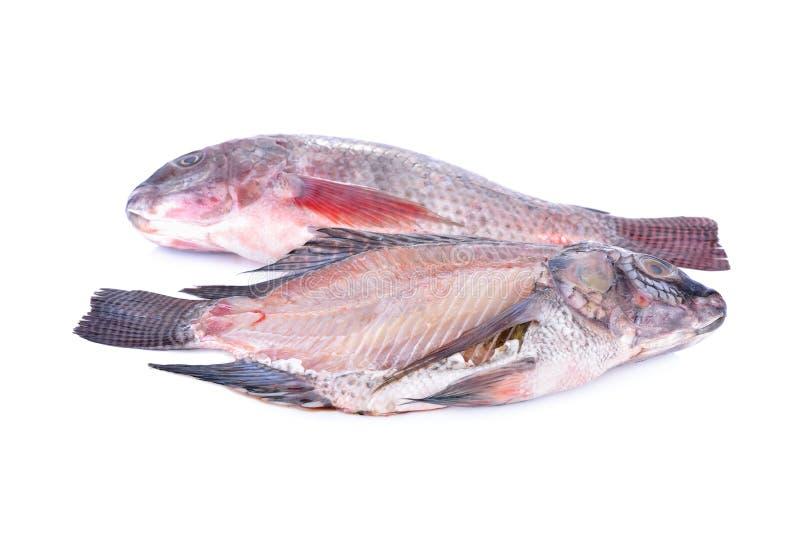 Inteiro e seção transversal de peixes frescos de Nile Tilapia na parte traseira do branco imagem de stock royalty free