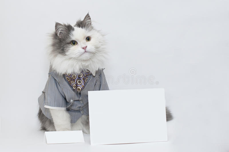 Download Inteligentny kot zdjęcie stock. Obraz złożonej z target31 - 28322508
