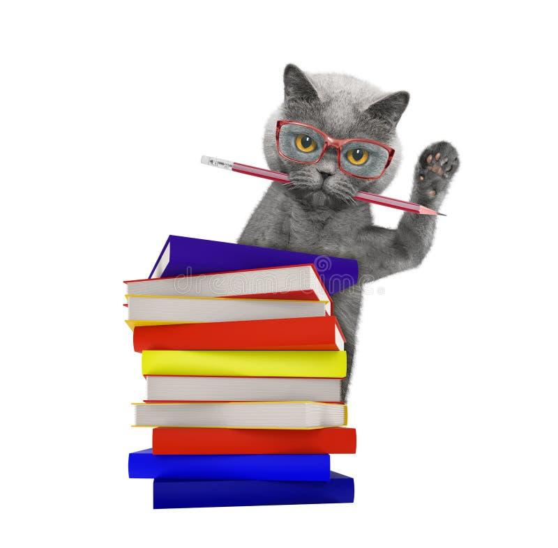 Inteligentny kot z książkami odizolowywać na bielu zdjęcie royalty free
