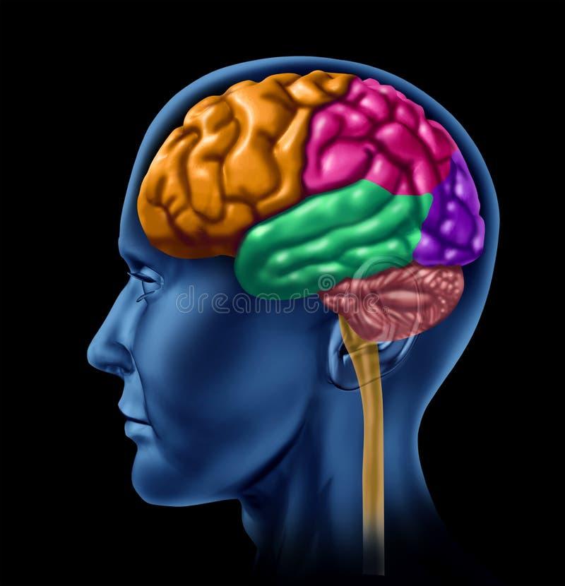 Intelligence d'activité de cerveau illustration libre de droits