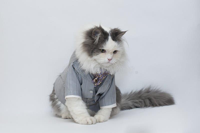 Intelligent Cat Royalty Free Stock Image