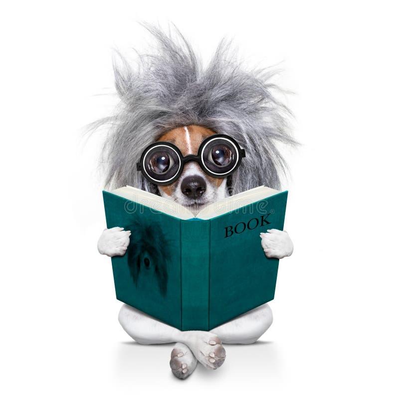 Intelligent smart hund som läser en bok arkivbilder