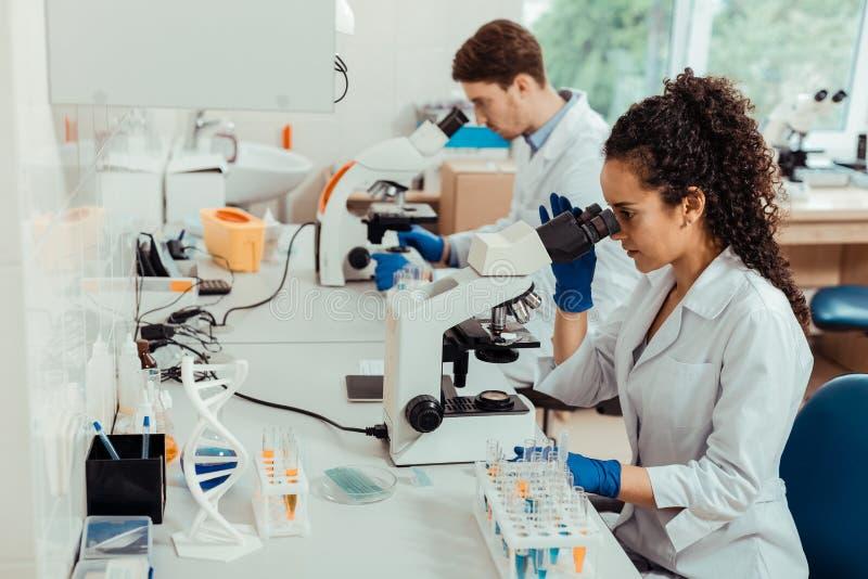 Intelligenta yrkesmässiga biologer som sitter på mikroskopen royaltyfria bilder