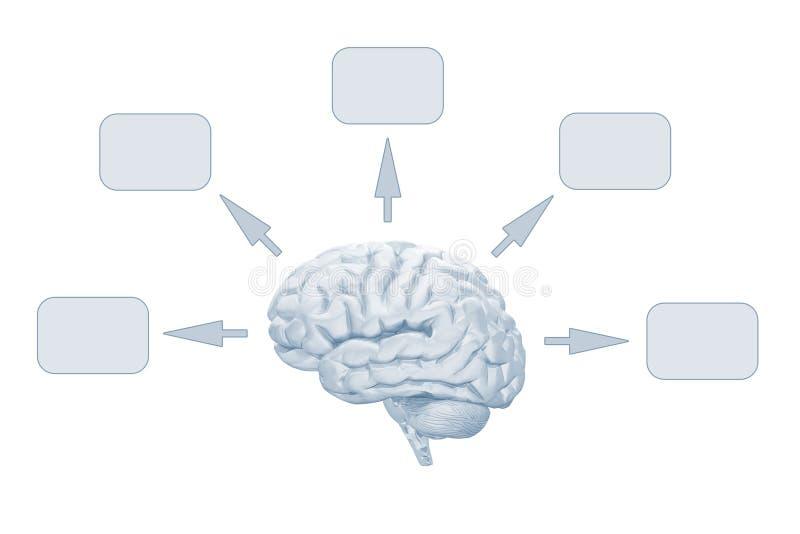Intelligente Hersenen stock illustratie