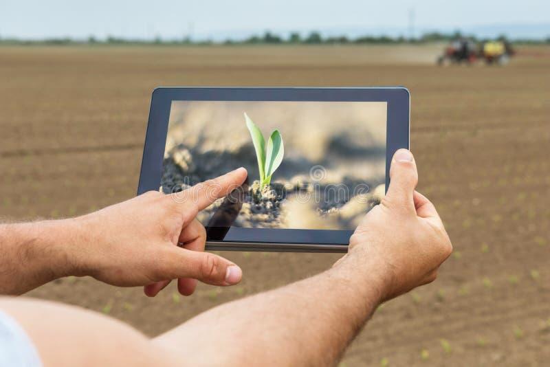 Intelligente Landwirtschaft Landwirt, der das Tablettenmaispflanzen verwendet Modernes AGR lizenzfreies stockbild