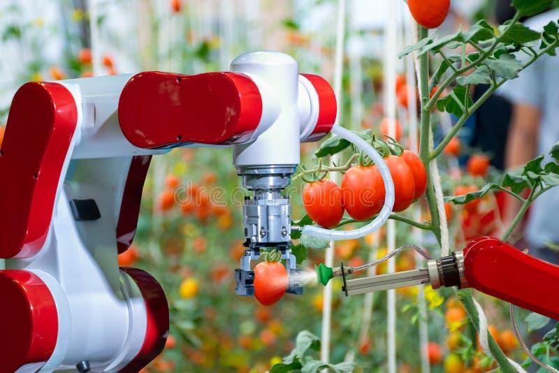 Intelligente Roboterlandwirte in der futuristischen Roboterautomatisierung der Landwirtschaft zu arbeiten, um Mineraldünger zu sp lizenzfreie stockfotografie
