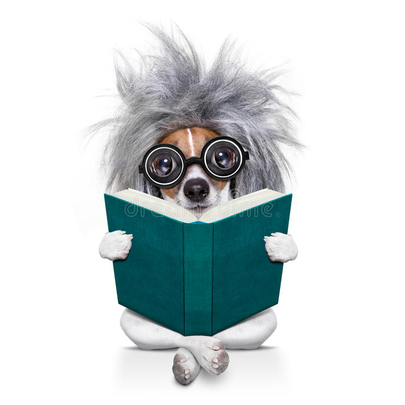 Intelligenter intelligenter Hund, der ein Buch liest stockbild