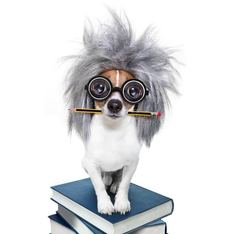 Intelligenter intelligenter Hund mit Büchern lizenzfreie stockbilder