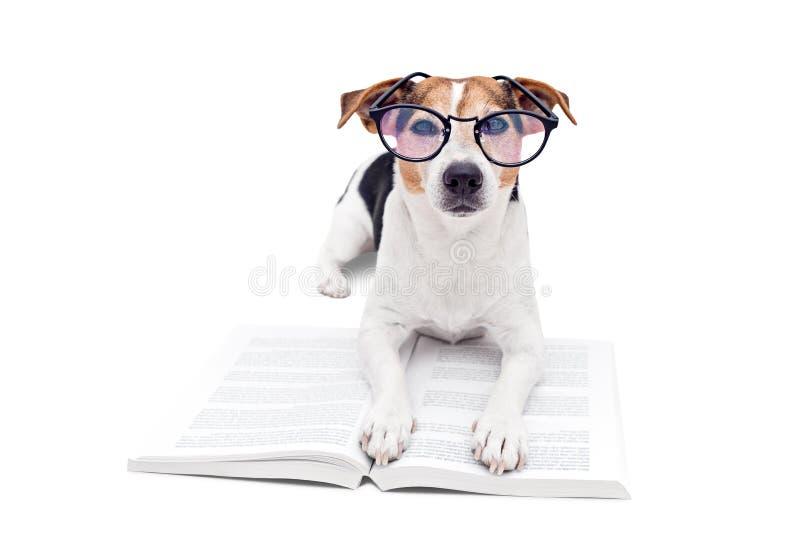 Intelligenter netter Hund, der mit offenem Buch in den Brillen liegt stockbilder