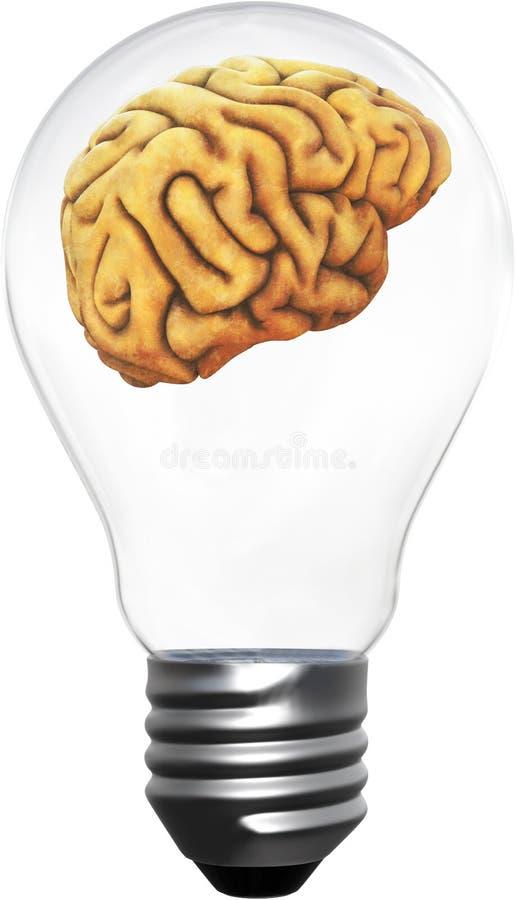Intelligentie, Ideeën, Innovatie, Geïsoleerde Hersenen, stock foto's