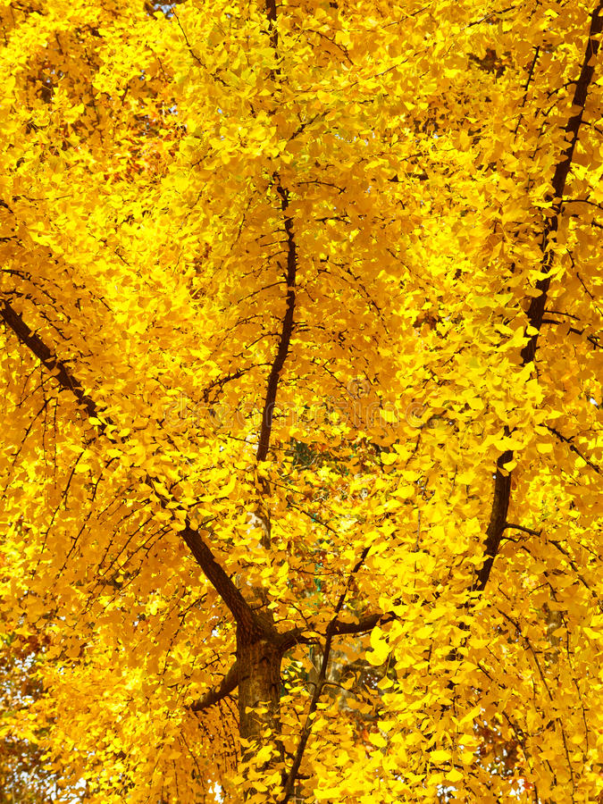 Download Intense Autumn Colors Royalty Free Stock Photos - Image: 28609828