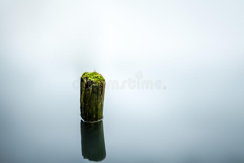 Green moss on a lonely tree trunk in calm lake. Moss lake water calm still trunk stillimage green blue lonely tree royalty free stock image
