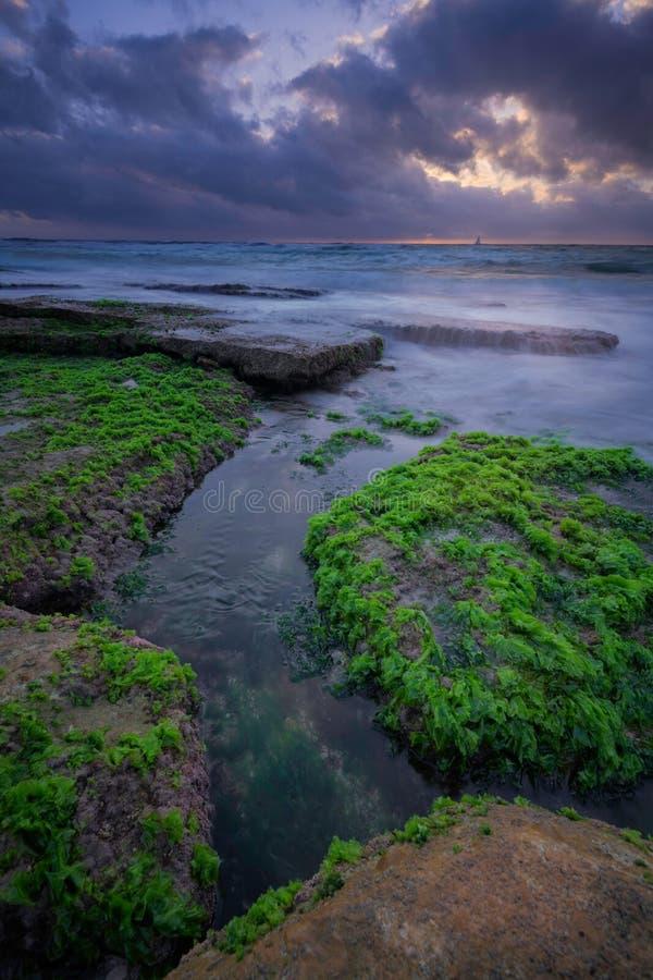 Cool seaweed on rocks during dramatic sunset stock photos