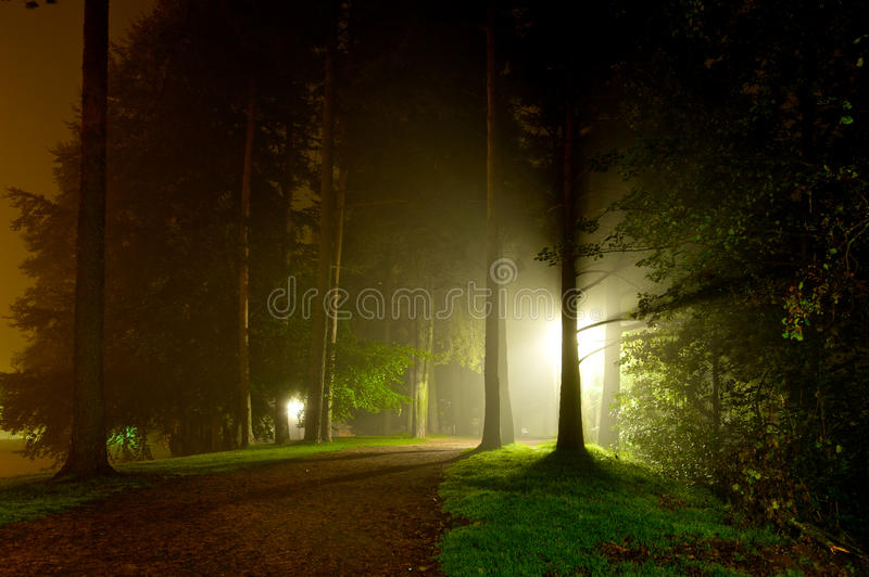 Download Intense Light Shining Through Trees Stock Image - Image: 21400641