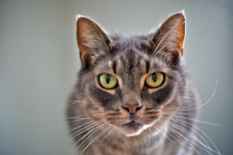 Intense looking cat stock photo