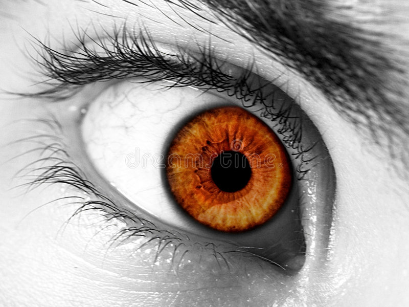 Intense Stare royalty free stock image