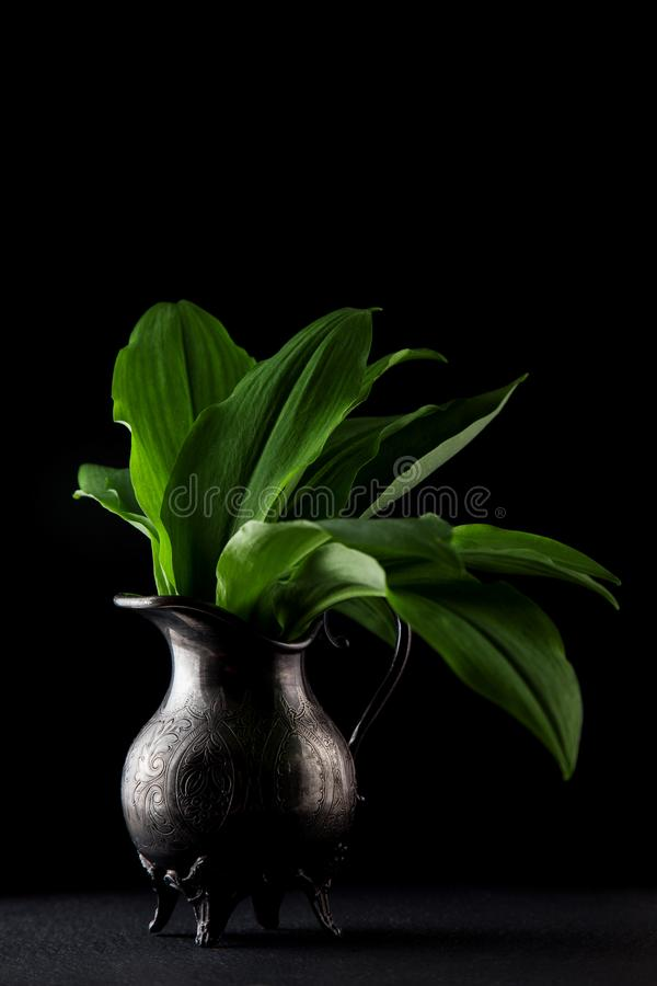 Intensely fragrant fresh green wild garlic herbs decorated on rustic dark slate plate. Kitchen plate stock photos