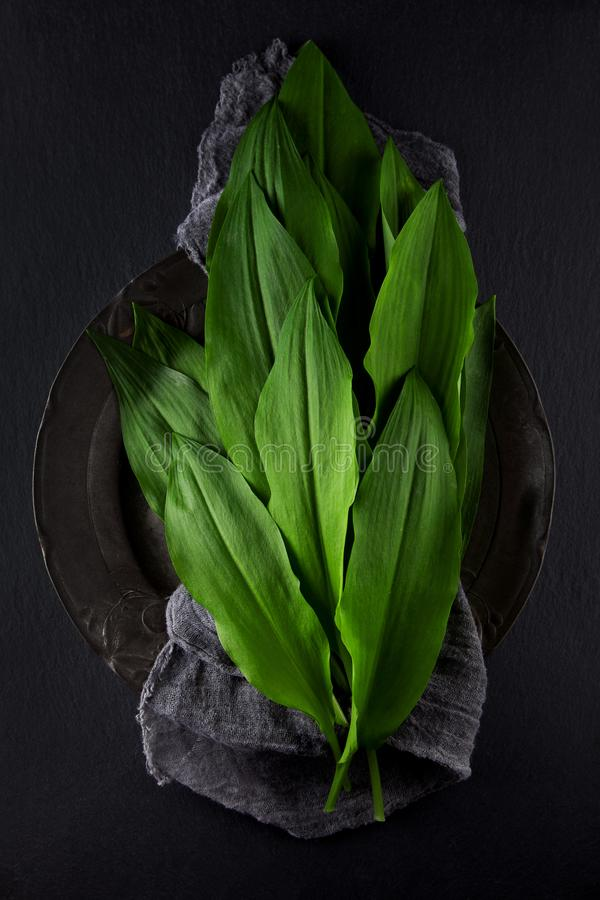 Intensely fragrant fresh green wild garlic herbs decorated on rustic dark slate plate. Kitchen plate royalty free stock images