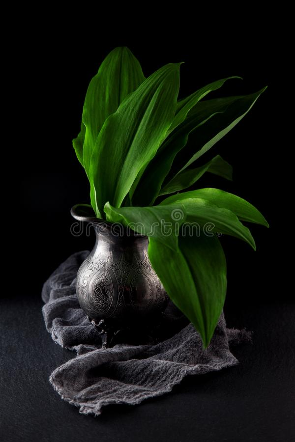 Intensely fragrant fresh green wild garlic herbs decorated on rustic dark slate plate. Kitchen plate stock photography