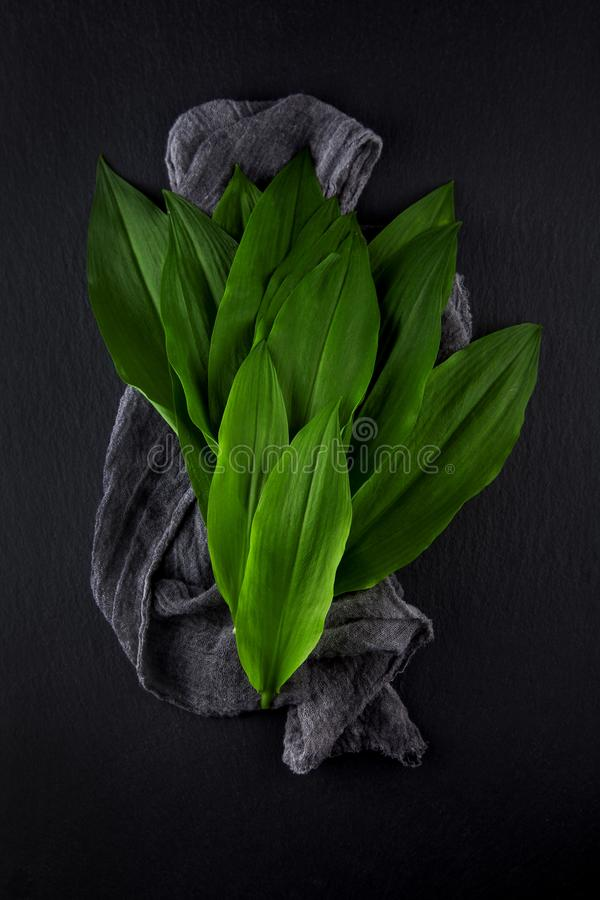 Intensely fragrant fresh green wild garlic herbs decorated on rustic dark slate plate. Kitchen plate stock photo