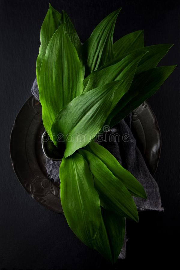 Intensely fragrant fresh green wild garlic herbs decorated on rustic dark slate plate. Kitchen plate royalty free stock photo