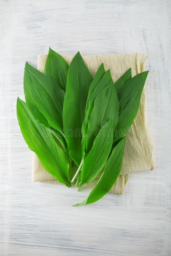 Intensely fragrant fresh green wild garlic herbs decorated on rustic white wood plate. Kitchen background stock image
