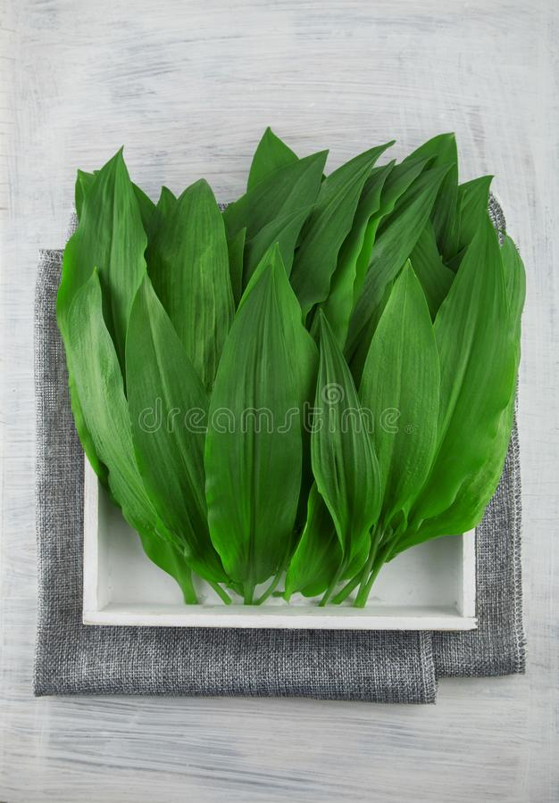 Intensely fragrant fresh green wild garlic herbs decorated on rustic white wood plate. Kitchen background royalty free stock photography