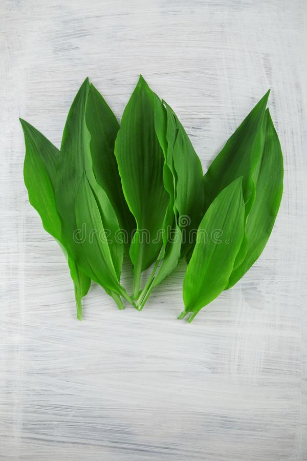 Intensely fragrant fresh green wild garlic herbs decorated on rustic white wood plate. Kitchen background stock photo