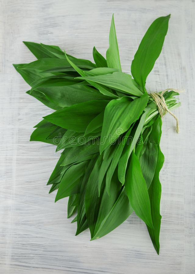 Intensely fragrant fresh green wild garlic herbs decorated on rustic white wood plate. Kitchen background stock images