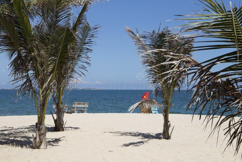 Intensywna żywotność kokosowi drzewa na pogodnej białej piaskowatej plaży obraz royalty free