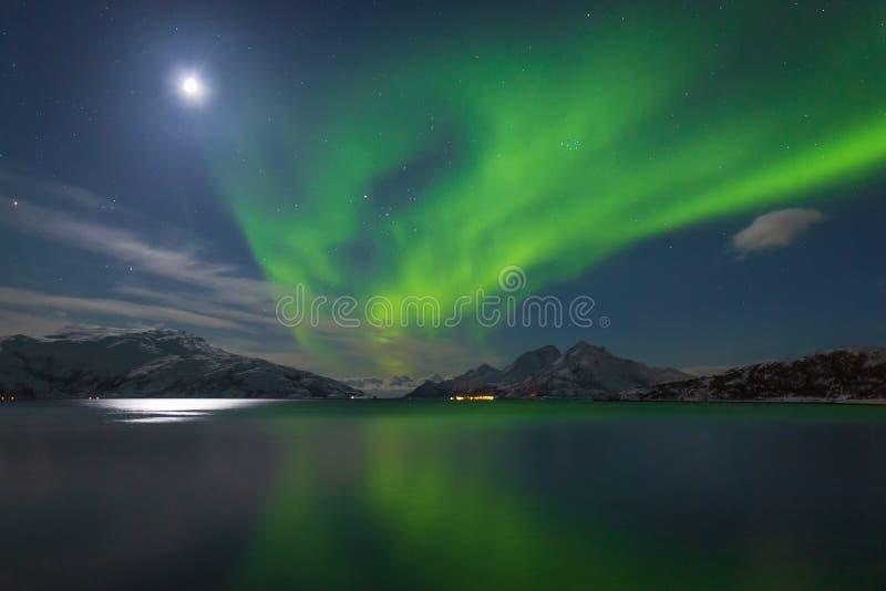 Intensywni zieleni północni światła nad górami i fjord fotografia stock