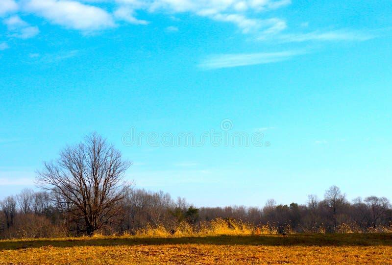 Intensywny niebieskie niebo Nad Złota ziemia i brud ścieżka na zima dniu obraz stock