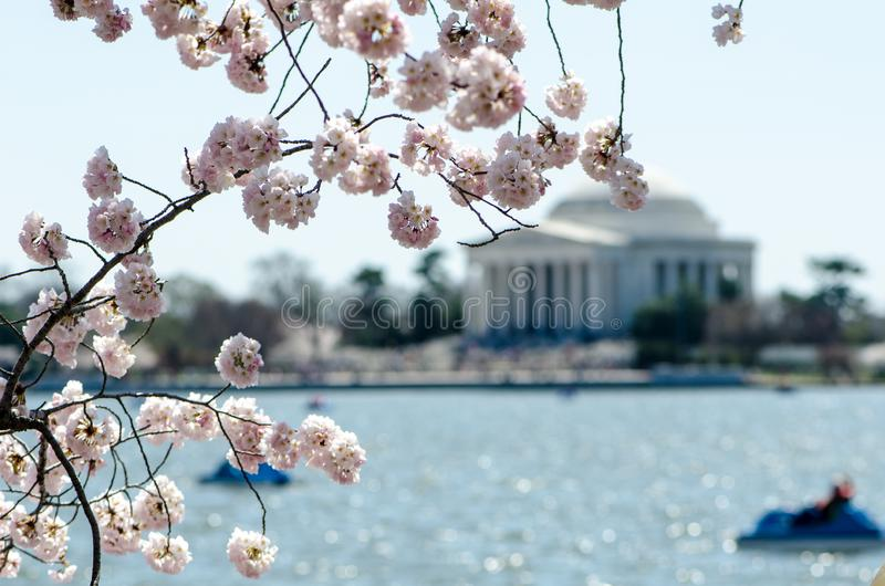 Intentional blurred background of the Jefferson Memorial with natural frame of Cherry Blossom flowers. Intentional blurred background of the Jefferson Memorial royalty free stock photos