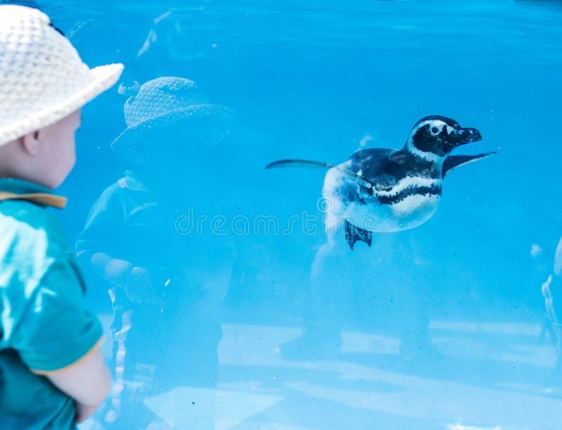 A interação entre o pinguim pequeno e os rapazes pequenos em Chongqing Zoo fotografia de stock royalty free