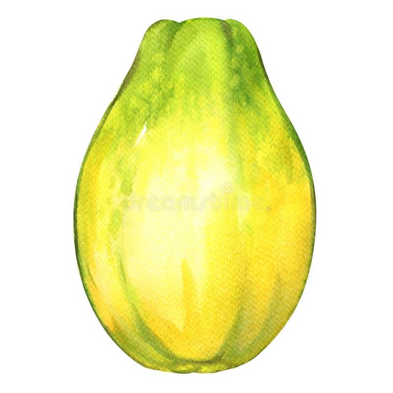 Intera frutta matura della papaia su fondo bianco illustrazione di stock
