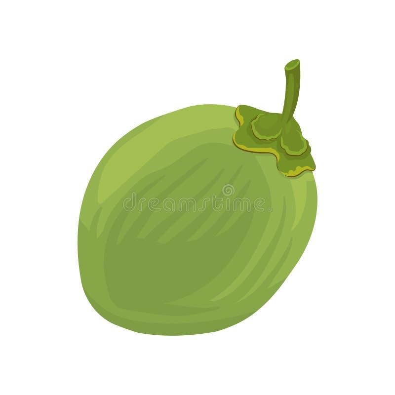Intera giovane noce di cocco verde Icona piana di vettore di frutta tropicale Elemento per l'imballaggio del prodotto, il manifes illustrazione di stock