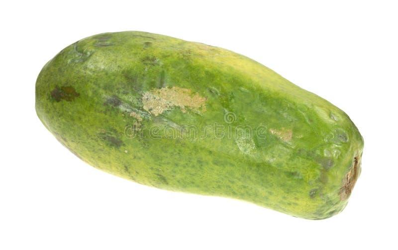 Intera papaia rossa matura di maradol fotografia stock