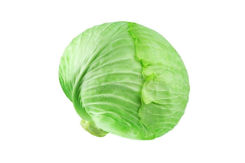 Intera testa di cavolo frondoso verde sulla fine isolata fondo bianco su, intorno a cavolo cappuccio bianco maturo, progettazione immagine stock libera da diritti