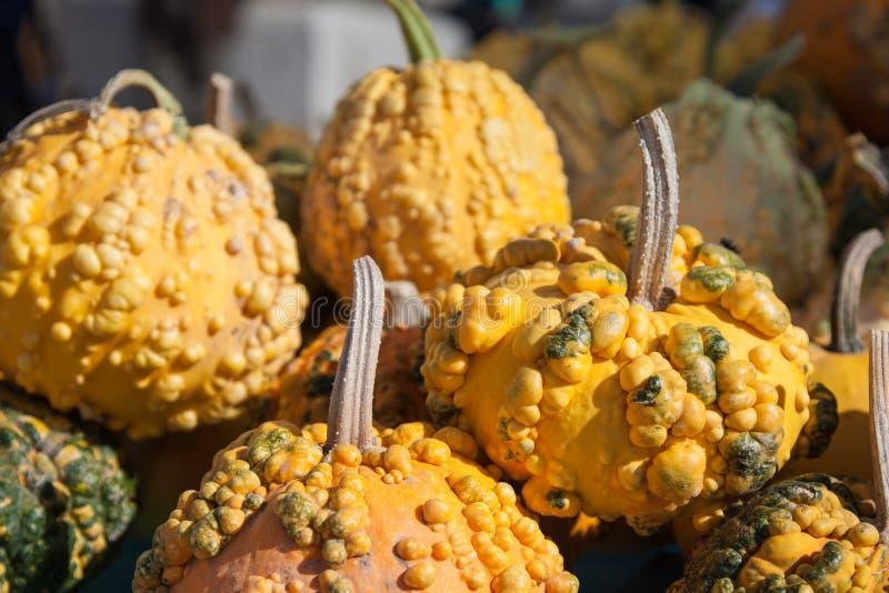 Intera zucca fresca dell'arachide su fondo bianco. immagine stock