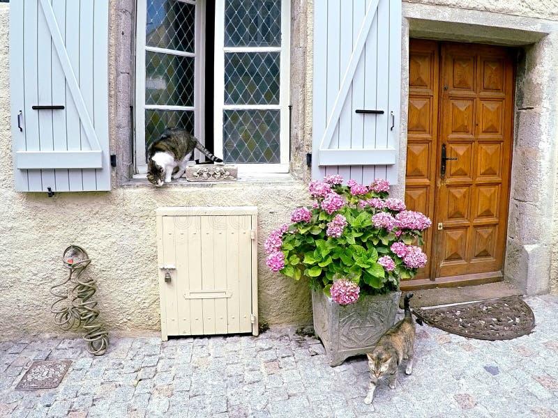 Interazioni del gatto di vicolo in villaggio francese accogliente fotografia stock