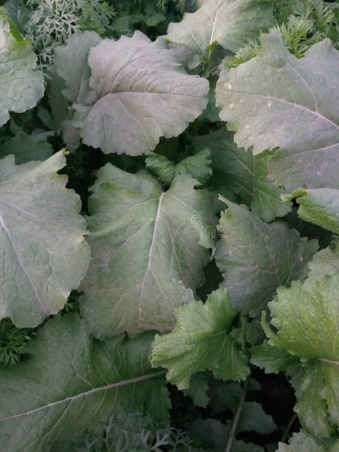 Intercropping warzywa zdjęcie stock