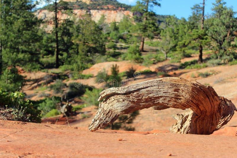 Interessant Logboek in Zion National Park stock afbeelding