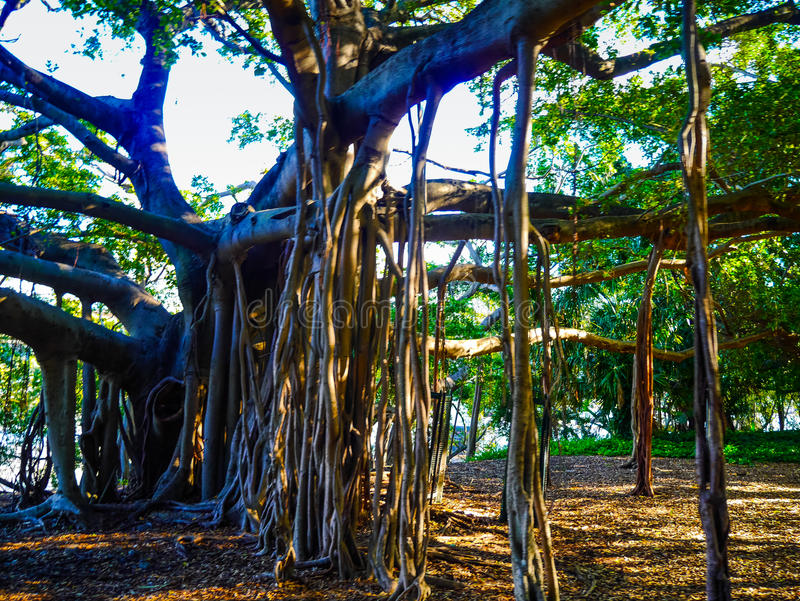 Interessante boom met dalende takken stock fotografie