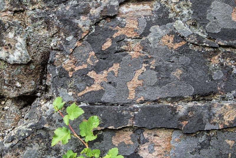 Interessante patronen op rotsmuur royalty-vrije stock fotografie