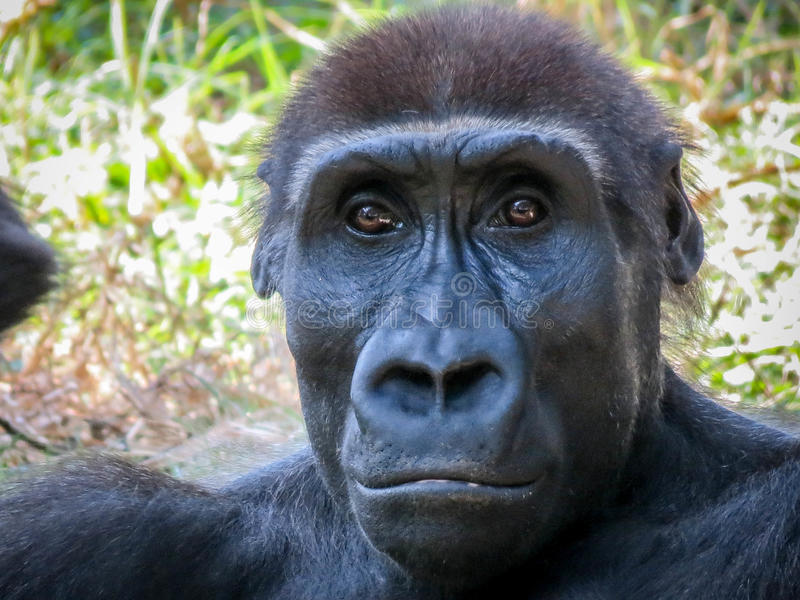 Interessanter Affe lizenzfreies stockbild